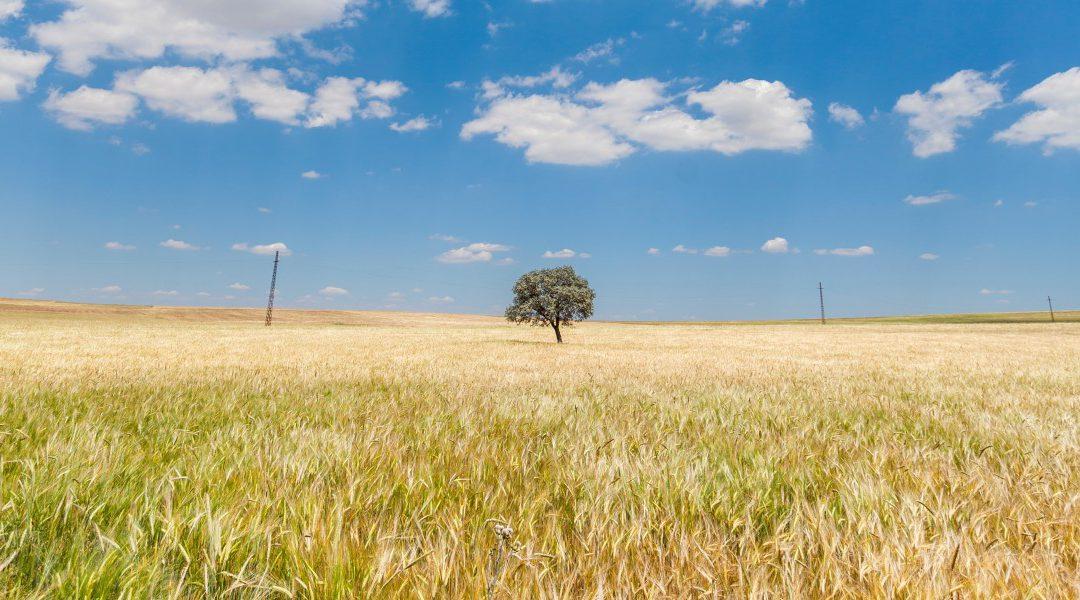 Вежбам фотографију – чувам животну средину